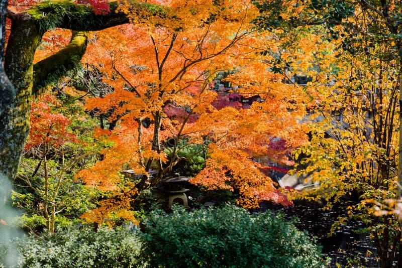 色亚洲日本18图_秋天旅行的亚洲日本五颜六色的森林.