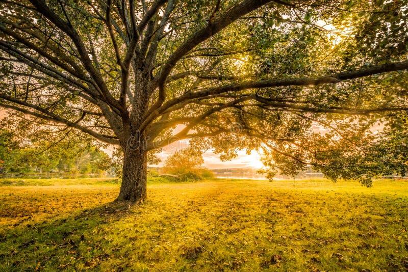 秋天日落在Parsippany,新泽西 库存图片