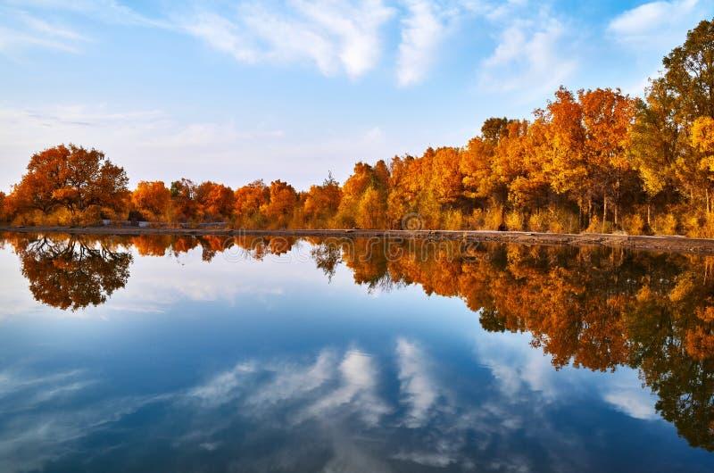 秋天日落的镇静湖 免版税图库摄影