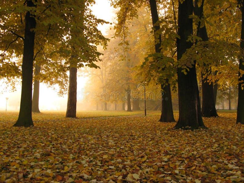 秋天早期的有雾的早晨 免版税库存图片