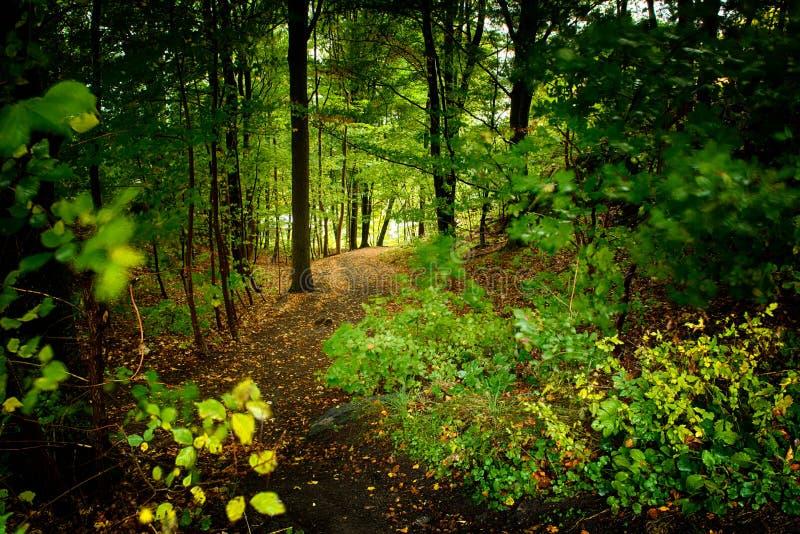 秋天早期的森林俄国线索 免版税库存照片