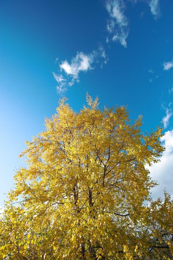 秋天早期的森林 免版税图库摄影