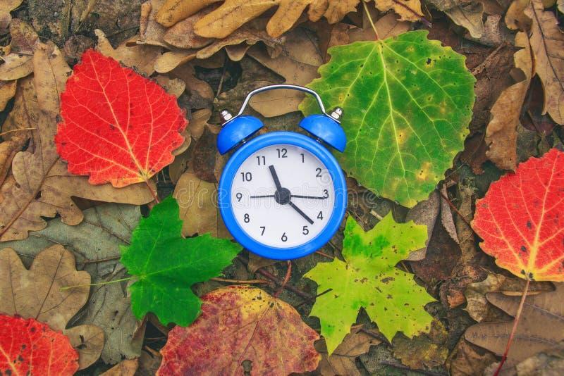 秋天时间 在地面上的下落的干燥叶子 五颜六色的叶子和闹钟 回到学校 折扣和销售 库存照片