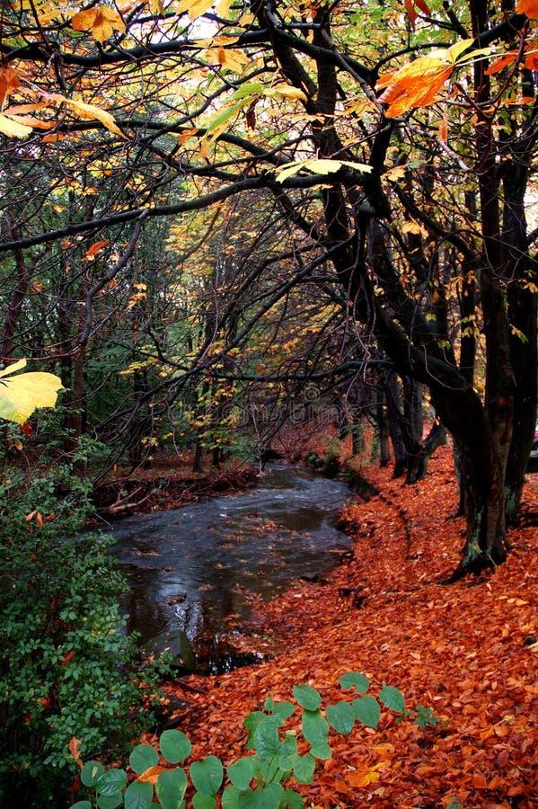 秋天时间 库存照片