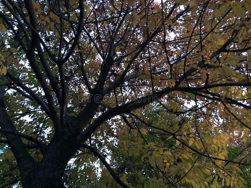 秋天时间树 免版税库存照片