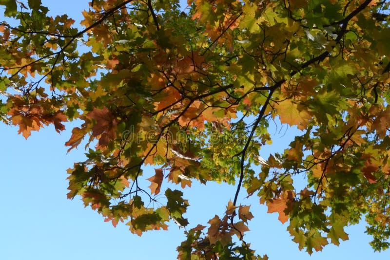 秋天时间 库存图片