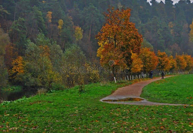 秋天明亮的叶子 图库摄影