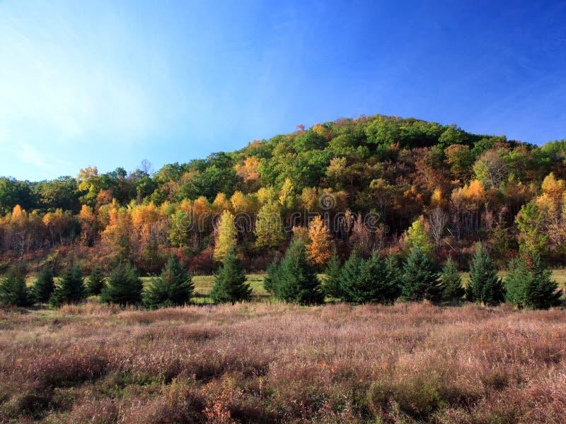 秋天明尼苏达结构树 库存图片