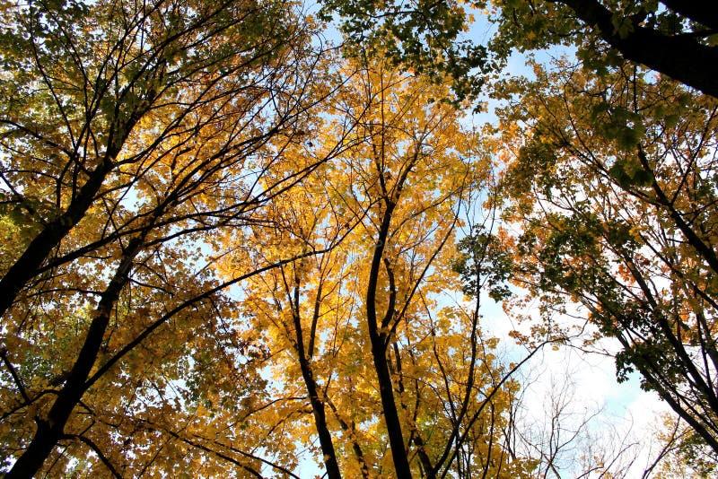 秋天晚上,在森林里 库存照片