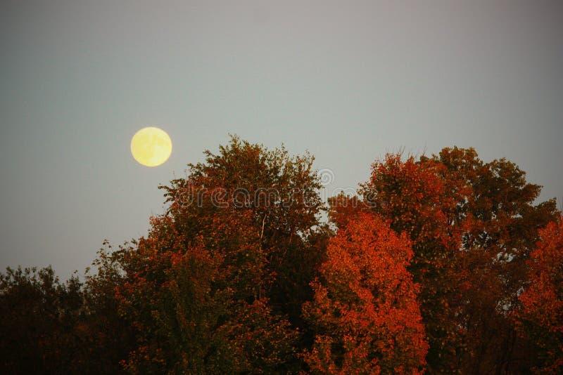 秋天月亮 免版税图库摄影