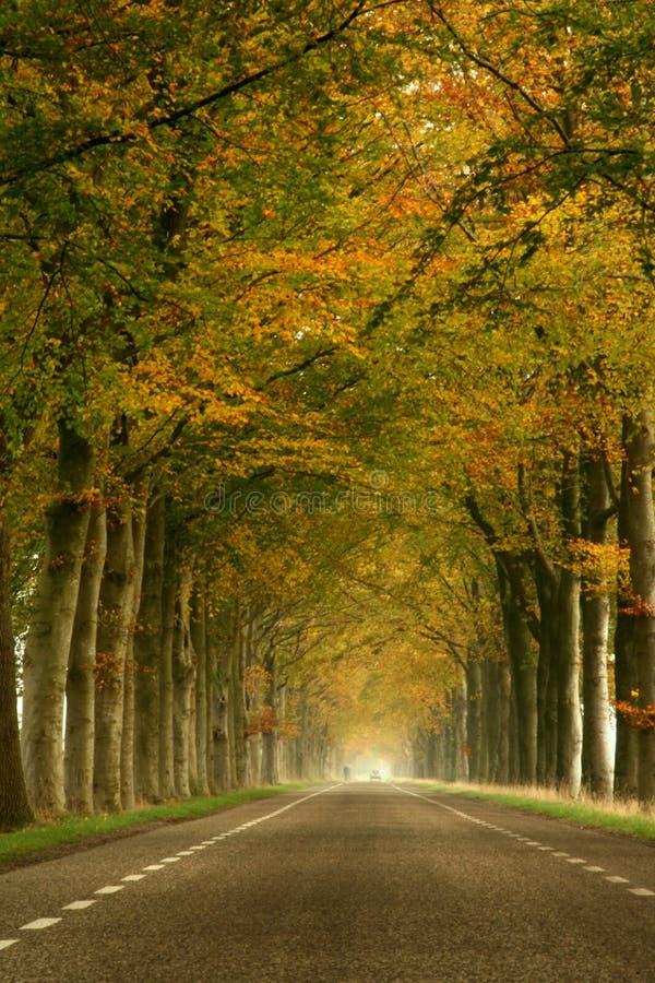 秋天有薄雾的路 图库摄影