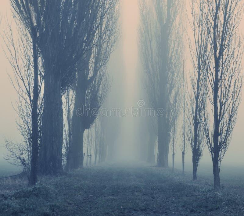 秋天有雾的天在森林里 免版税库存图片