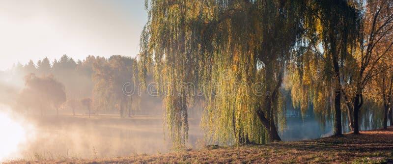秋天有雾的早晨在城市公园 免版税库存图片