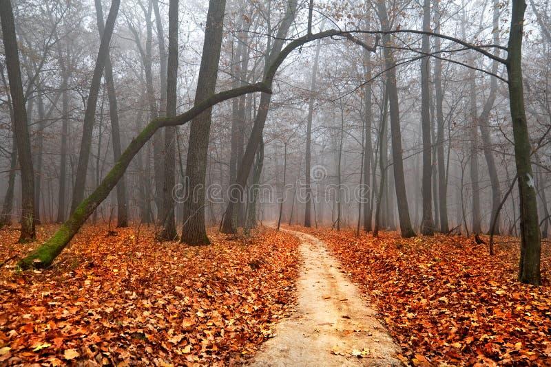 秋天有雾的横向 免版税图库摄影