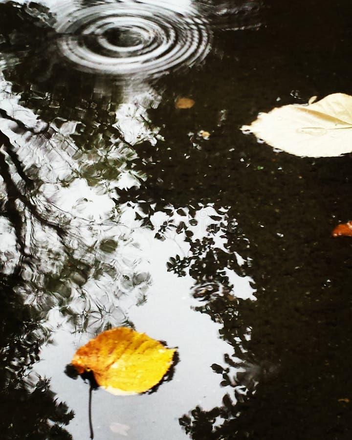 秋天期初草绿色留下黄色 图库摄影