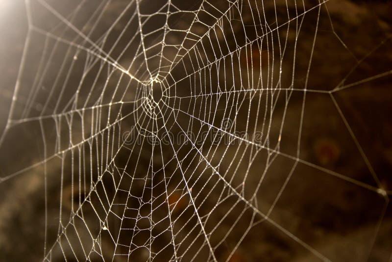秋天期初 免版税图库摄影