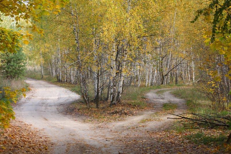 秋天木头的交叉路。 免版税库存照片