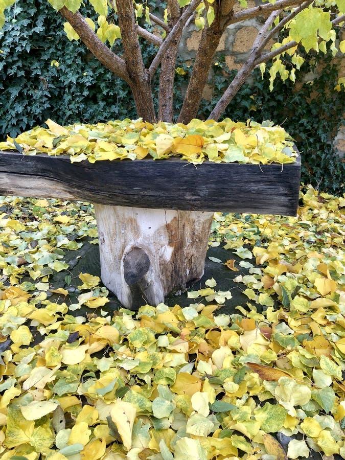秋天来到我们的庭院 图库摄影