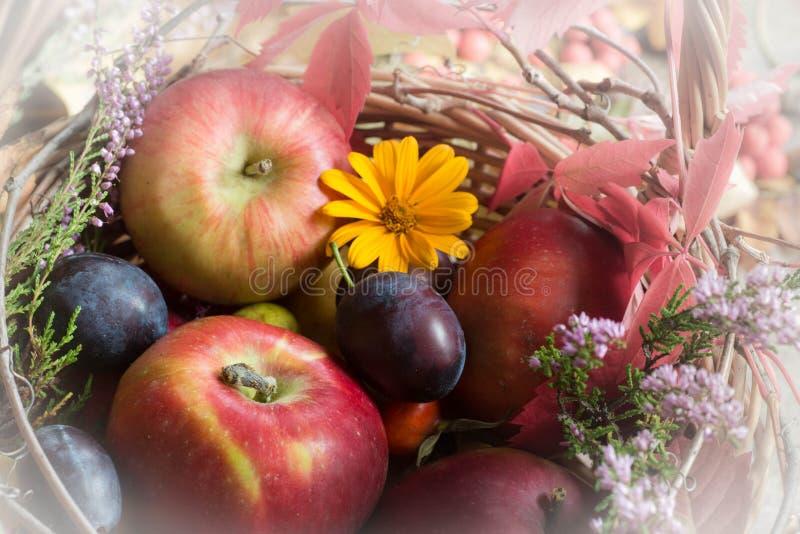 秋天果子、花和叶子在篮子静物画 库存图片