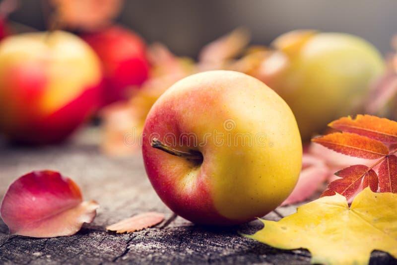 秋天果子和五颜六色的叶子在老破裂的木背景 秋天 感恩 库存照片