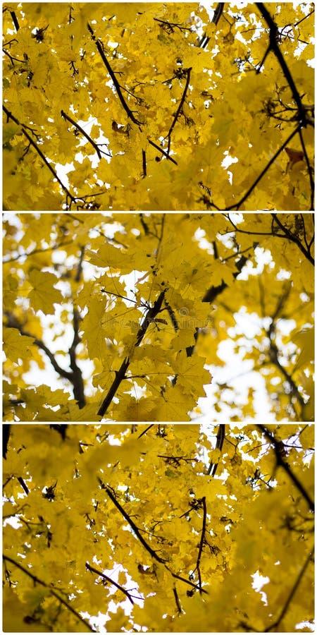 秋天染黄叶子拼贴画 库存图片