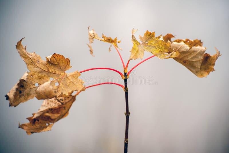 秋天染黄的叶子 库存图片