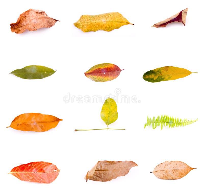 秋天查出的叶子白色 库存图片