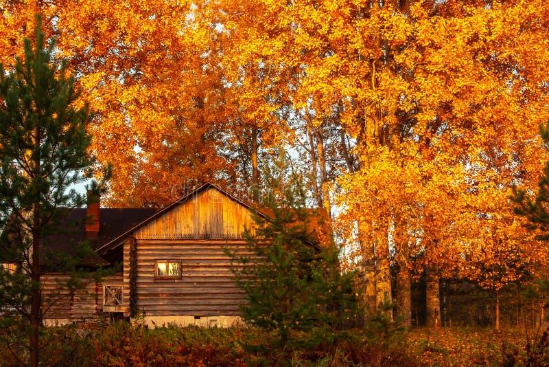 秋天树之前包围的土气木屋在日出在一个有雾的早晨 E 库存图片