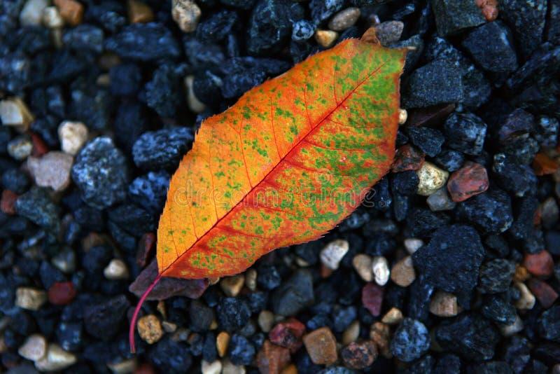 秋天树叶子森林天 免版税库存图片