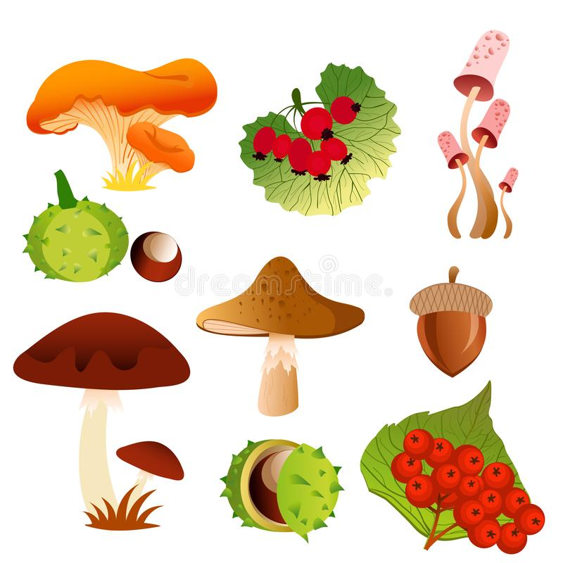 秋天树叶子秋天自然象的传染媒介例证和季节性蘑菇、莓果和橡木盖帽式螺帽 向量例证