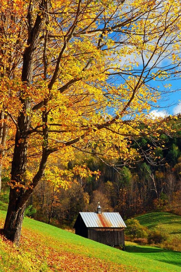 秋天树在农村佛蒙特开始丢失它的叶子 免版税库存照片