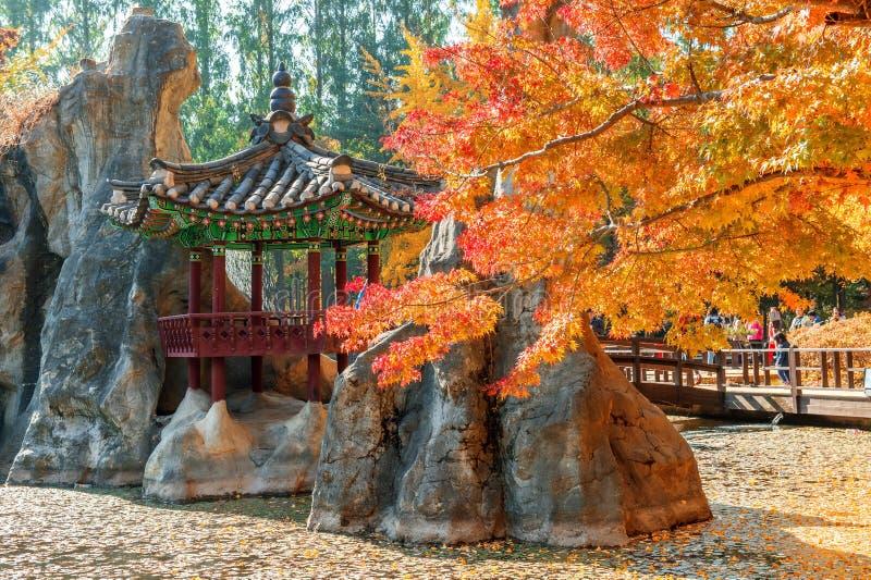 秋天树在娜米海岛,韩国 免版税库存图片