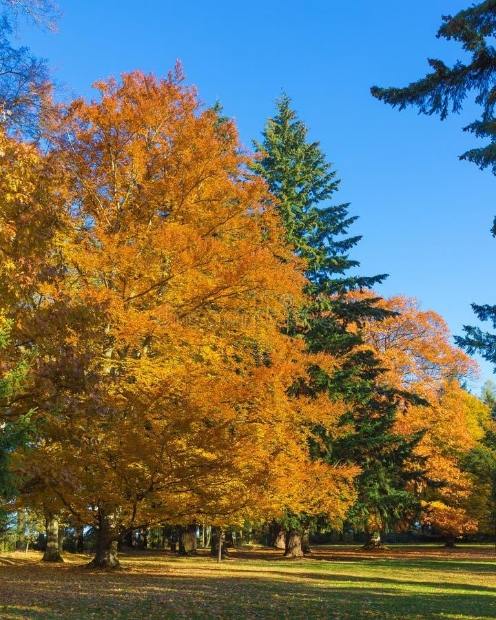 秋天树在围拢Cervena Lhota的公园防御 免版税图库摄影