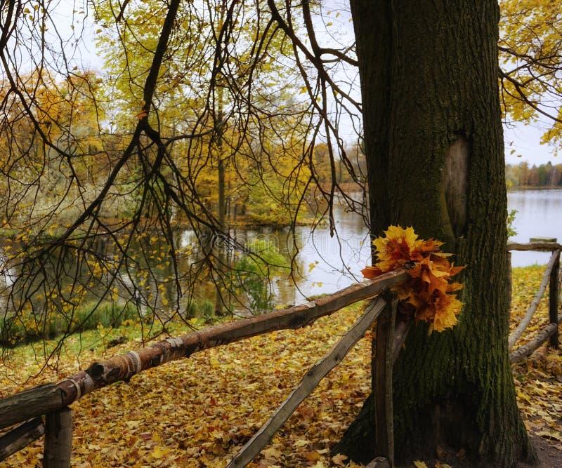 秋天树干自然分支湖水反射公园篱芭离开 免版税库存照片