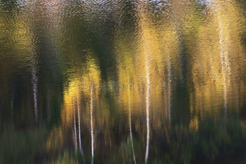 秋天树的反射在湖水中 秋天背景特写镜头上色常春藤叶子橙红 库存照片