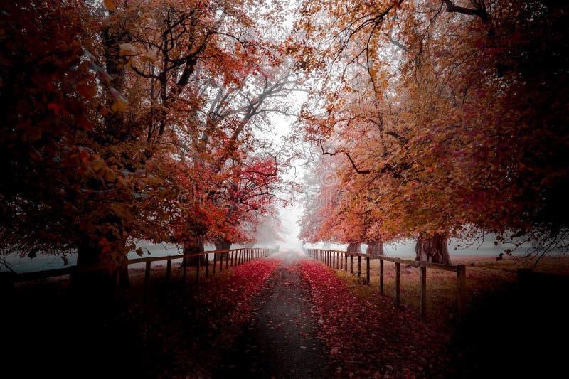 秋天树秋天道路 库存照片