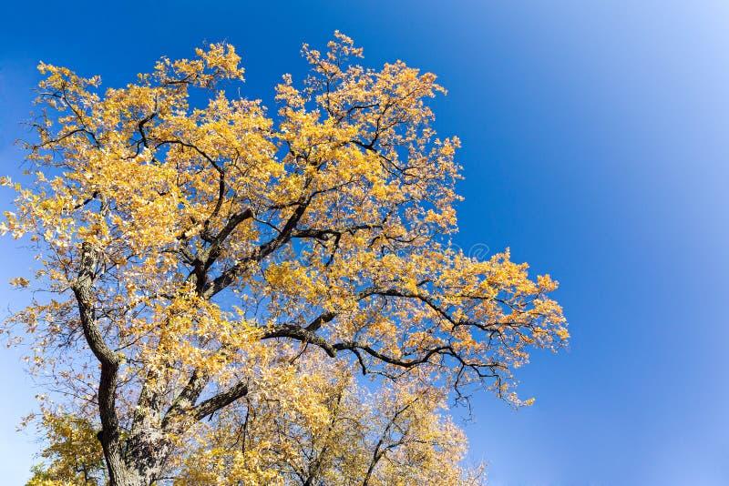 秋天树黄色清楚的叶子和上面与天空蓝色的餐厅室内设计ppt图片