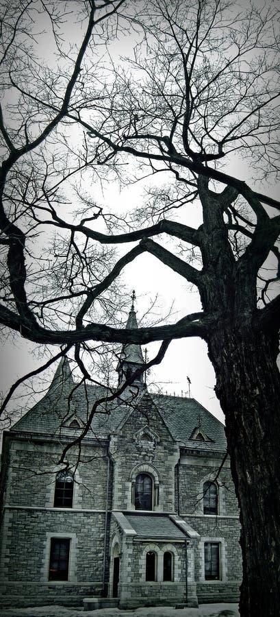 秋天树街市渥太华 库存照片