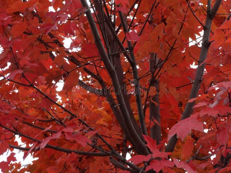 秋天树离开叶子冬天颜色 免版税库存照片