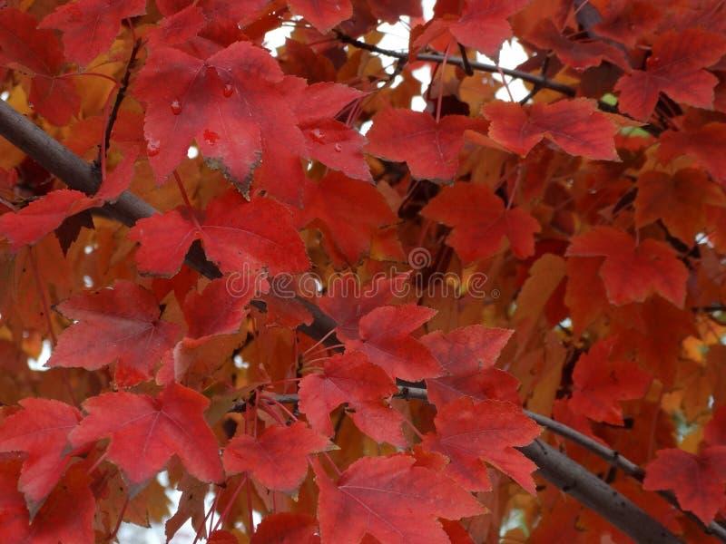 秋天树离开叶子冬天颜色 免版税库存图片