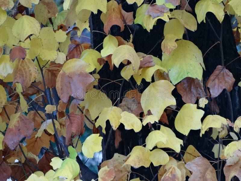 秋天树离开叶子冬天颜色 库存图片