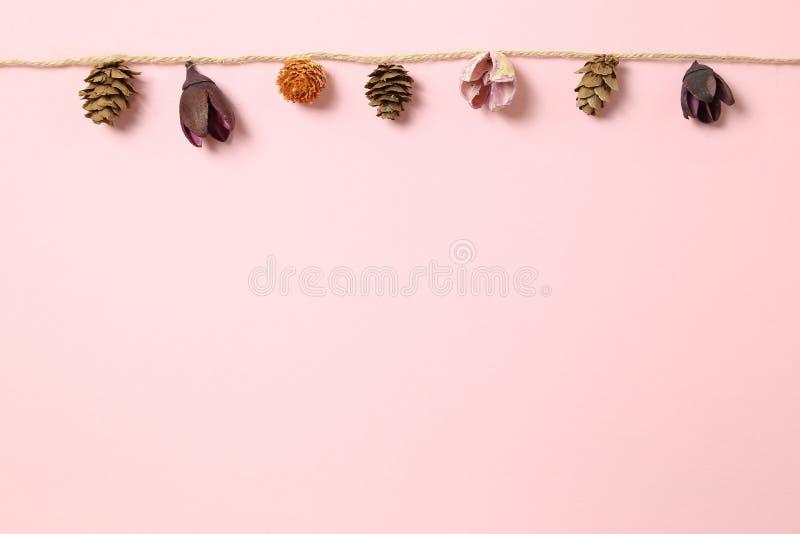 秋天栗子装饰葡萄10月石榴木头 干燥杉木锥体,垂悬在桃红色背景的串的花 免版税库存照片