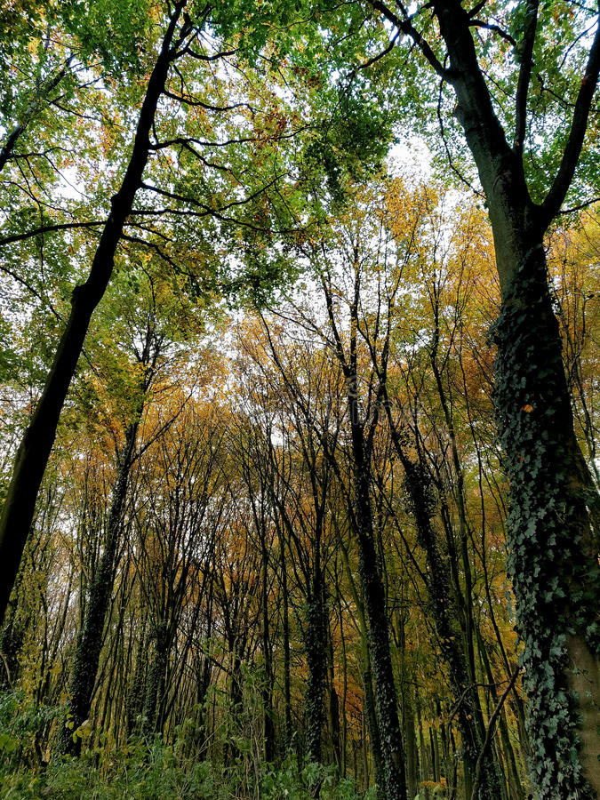 秋天桦树叶子草甸橙树 免版税图库摄影