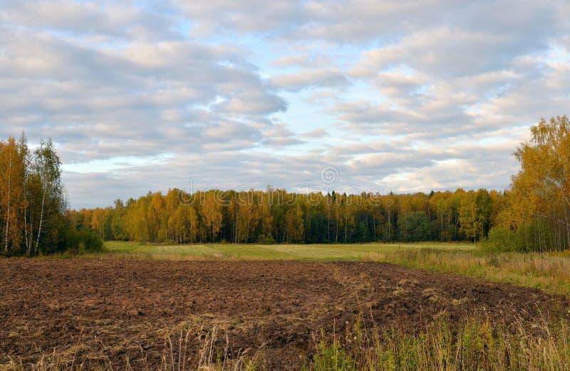 秋天桦树树丛和被犁的领域, Kostroma地区,俄罗斯 免版税库存图片