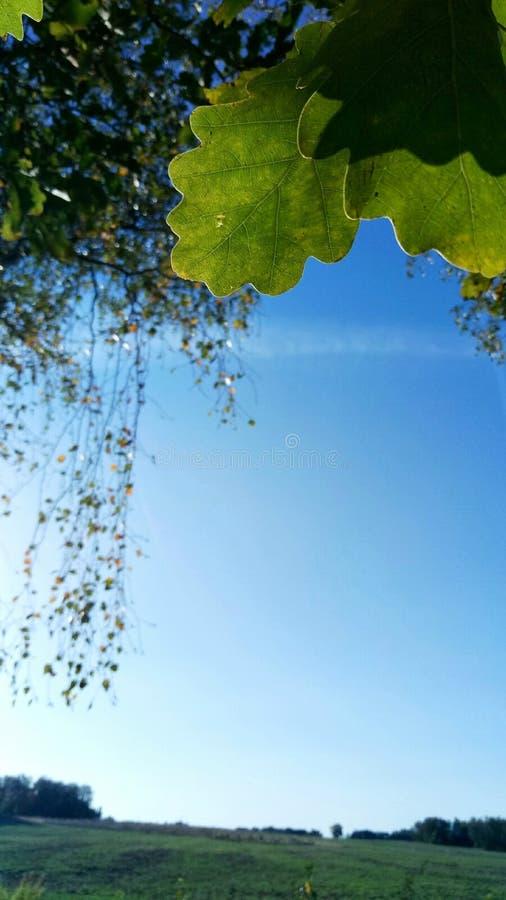 秋天森林、领域和天空 免版税库存图片