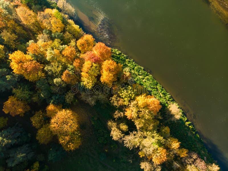 秋天森林和一个小湖俯视图  空中森林场面在与橙色和黄色叶子的秋天 秋天风景 免版税库存照片