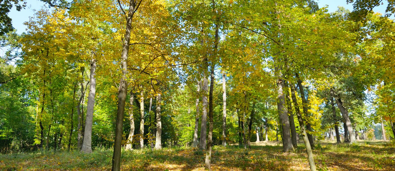 秋天森林和下落的黄色叶子 宽照片 库存照片