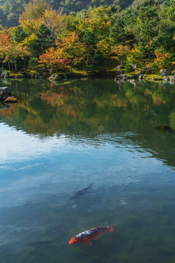 秋天森林和小井胡扯鱼在慈照寺寺庙著名旅行目的地的池塘在京都,日本 免版税库存图片