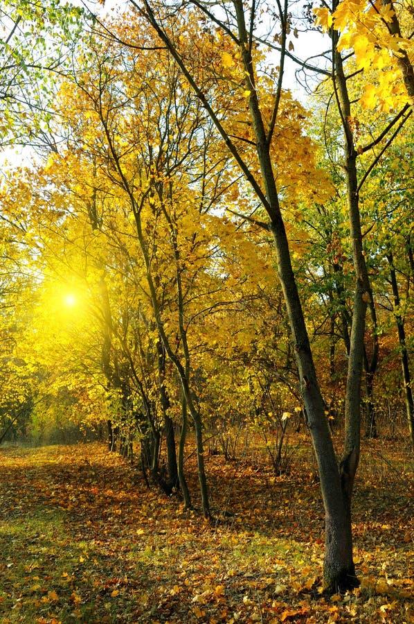 秋天森林和日落 库存图片
