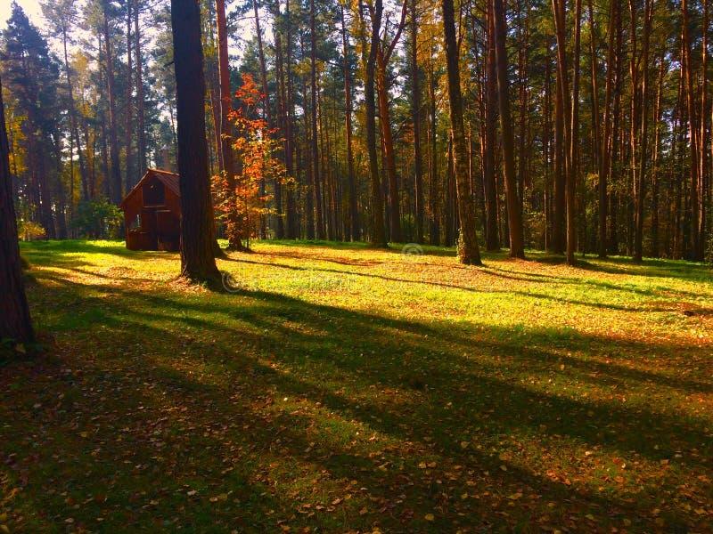 秋天森林在俄罗斯 免版税库存照片
